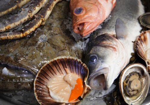 fishplate2klein 2